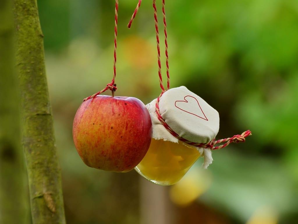 שנה חדשה ניוזלטר פנדה שנה טובה ומתוקה תפוח בדבש